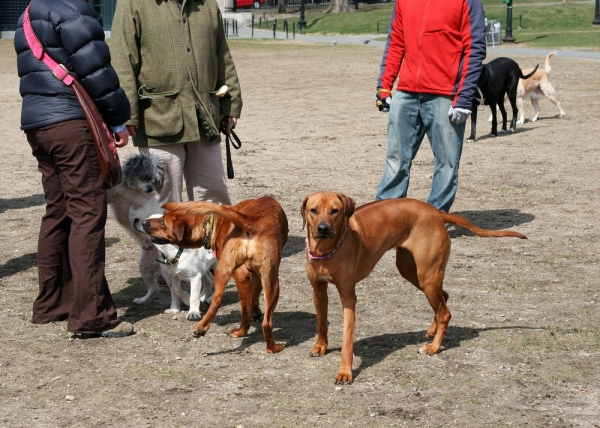 Meet New People At A Dog Park