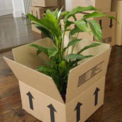 Preparing Plants for Moving